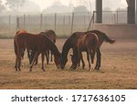 Horses Grazing On Grass On A...