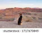 Dog Looking At The Desert Hills ...