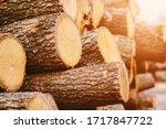 Woodpile Fresh Cut Pine Logs A...