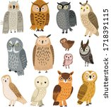 Owls. Vector Set Of Different...