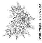 hand drawn peony flowers  buds... | Shutterstock .eps vector #1718429455