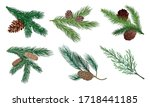 Pine And Fir Tree Branches Wit...
