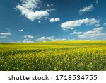 Beauty Spring View Of Field...