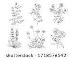 Linear Flowers. Wildflowers In...