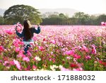 Stock photo little asian girl standing in cosmos flower fields 171888032