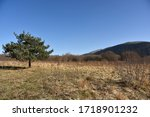 a tree in nature    bolu ... | Shutterstock . vector #1718901232
