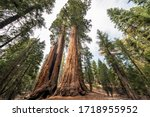 Small photo of View at Gigantic Sequoia trees in Sequoia National Park, California USA