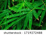 Water Droplets On The Leaves Of ...