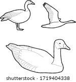 Canada Goose Vector...