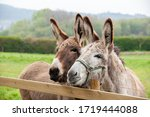 Family of donkeys outdoors in...