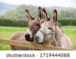Family of donkeys outdoors in...