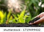 Planting crops on fertile soil...