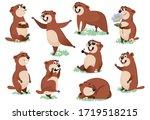 Marmot Or Beaver Wild Animal...