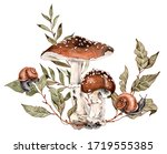 Forest Plants And Snails...