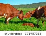 cows  love | Shutterstock . vector #171957386