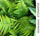 Macro Photo Of Green Fern...