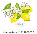 lemon tree branch with yellow... | Shutterstock .eps vector #1719833392