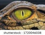 Zoom Crocodile's Eyes At Close...