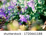 Flight Of A Large Bumblebee...