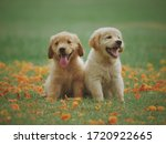 Two Cute Puppies Smiling On A...