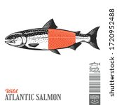 vector wild atlantic salmon... | Shutterstock .eps vector #1720952488