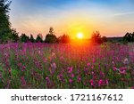 Red Flowers In Wild Field On...