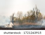 Dry Grass Burns In A Forest...