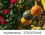 Colorful Dried Bottle Gourds ...