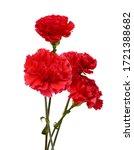 The Long Stem Carnations Gift...