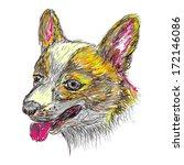 vector illustration of an dog... | Shutterstock .eps vector #172146086