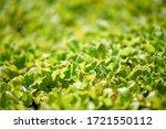 close up of a fresh garden salad | Shutterstock . vector #1721550112