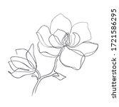 Magnolia Flowers Continuous...
