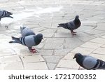 Pigeons On The Pavement Of City....
