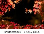 Autumn Red Maple Leaves That...