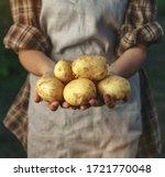farmers holding potatoes in... | Shutterstock . vector #1721770048