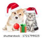 Pembroke Welsh Corgi Puppy Who...