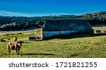 Cowshed And Cows On Pasture In...
