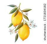 Watercolor Lemon Fruits. Branc...
