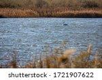 Lake Vistonida Near Porto Lago...