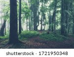 Small photo of Green summer forest at misty rainy day. Woodland nature