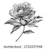 peony rose flower vintage black ... | Shutterstock .eps vector #1722257548