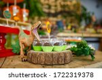 Children's party with wild theme