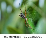 Colorful Spider Argiope...