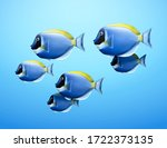 Lovable Shoal Of Blue Tang Fis...