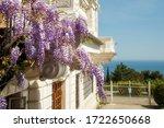 Purple Wisteria Blossoms On A...
