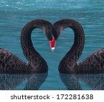 black swan's hearts  | Shutterstock . vector #172281638