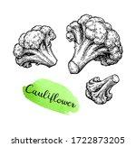 cauliflower. ink sketch...   Shutterstock .eps vector #1722873205