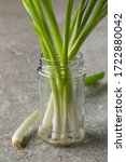 Fresh Spring Onions In A Glass...