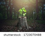 Young Tree Plant Emerging From...
