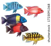 Group Of Fish Cichlids Of...